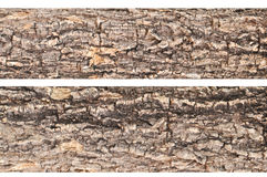 Bark of tree texture. Two bark of tree texture Royalty Free Stock Image
