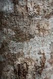 Bark tree texture in the wood.  stock images