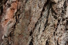 Bark tree texture in the wood.  stock photography