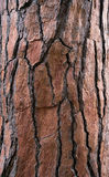 Bark tree textured Stock Photography