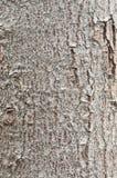 Bark of tree. Royalty Free Stock Photos