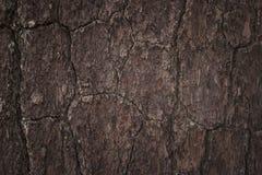 Bark tree and tree trunk texture Stock Photos