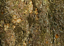 Bark from a tree trunk Royalty Free Stock Photos