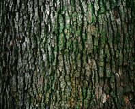 Bark on tree trunk Stock Image