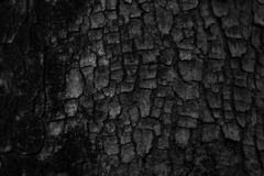 Bark tree trunk, very fissured in black and white royalty free stock photos