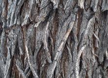 Bark Tree wood texture Royalty Free Stock Photos