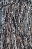 Bark Tree wood texture Stock Photo