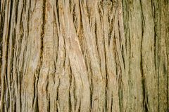 Bark of tree stock photography