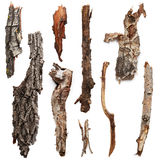 Bark trees Stock Image