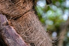 Bark on the trunk of a palm tree. In the form of thin interlacing wood threads Royalty Free Stock Photos