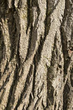 Bark of the trunk Stock Photo