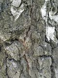 Rough Tree Bark Macro Texture. The bark from the trunk of a pine tree, it is very rough Stock Photo