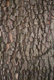 The bark of walnut Royalty Free Stock Photos