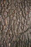 The bark of walnut Royalty Free Stock Photos