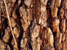 Rough Native Missouri Tree Bark stock images