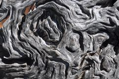 Bark Whichever Way the Wind Blows: Texture Abstract Stock Image
