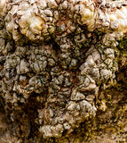The Bark that Won`t Bite Royalty Free Stock Image