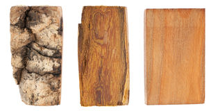 The bark and wood of amur velvet Stock Photos