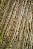 Bark wood texture stock photos