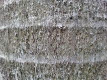 Bark wood texture Royalty Free Stock Photography