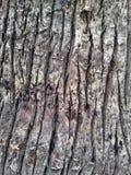 Bark wood texture Royalty Free Stock Photo