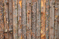 Bark wood texture Stock Photography
