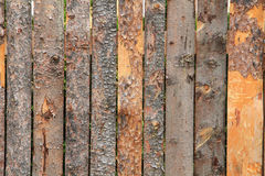 Bark wood texture Royalty Free Stock Images