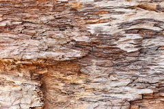 Bark wood texture background Royalty Free Stock Photography