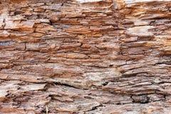 Bark wood texture background Royalty Free Stock Photo