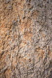 Bark wood texture. Background in natural Royalty Free Stock Photography