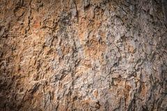 Bark wood texture Stock Image