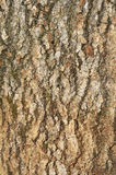 Bark wood texture background Royalty Free Stock Image