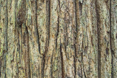 Bark wood texture Stock Images