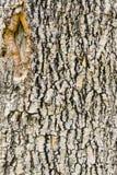 Bark wood texture Stock Photo