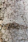 Bark wood texture Royalty Free Stock Image