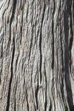 Bark Wood Texture. Royalty Free Stock Photo
