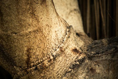 Bark wood Stock Images