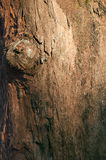 Bark wood tree texture background royalty free stock images