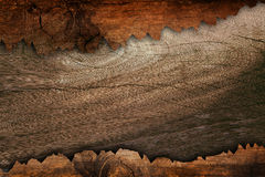 Bark wood Stock Photography