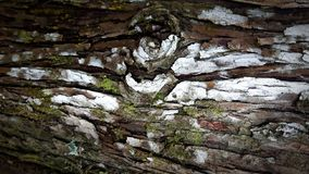 Bark wood use as natural background. Texture royalty free stock photography