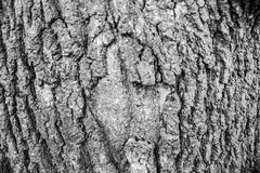 Bark, wooden texture backround, brown tree bark baground royalty free stock photo