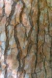 Bark ,Wooden texture Stock Image
