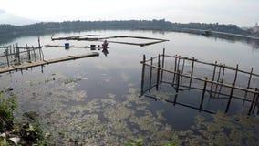 Barkarzy paddles bambusowa tratwa przez zanieczyszczających jezioro ryba pióra zdjęcie wideo