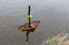 Barkbåt som svävar på vatten arkivfoto