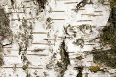 Barke Stockbilder