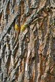 Barke Stockbild