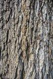 barke Lizenzfreies Stockbild