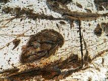 Barke der alten hölzernen weißen Birke Lizenzfreies Stockfoto