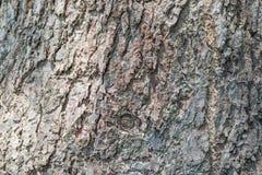 Barke der Baumbeschaffenheit stockfotografie