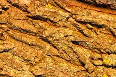 Barke der Baumrinde, Stockfotografie